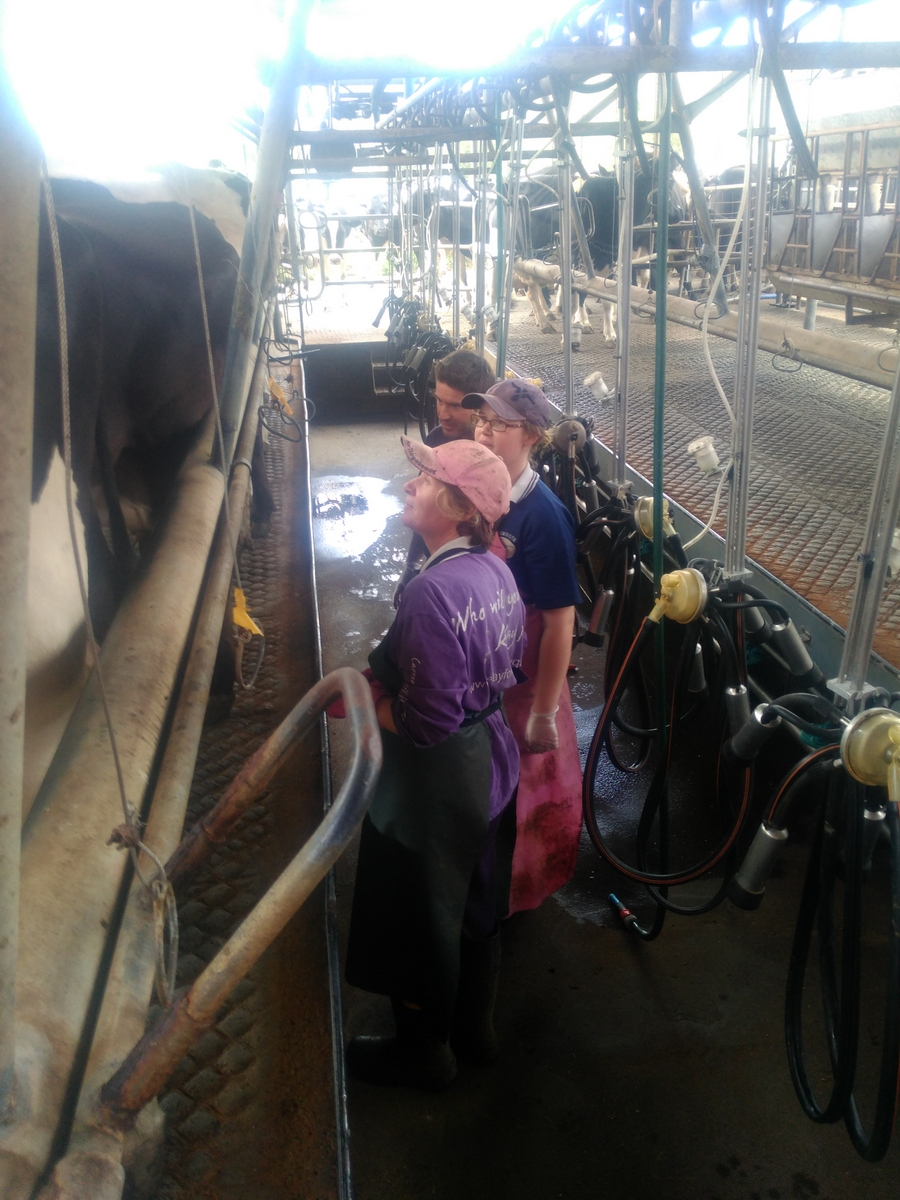 In the milking shed